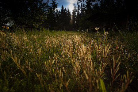 Rannach_Grass